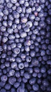 Gary's blueberry Farm